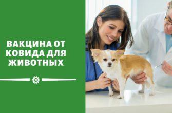 Вакцина от Covid-19 для животных появится в России в 2021 году
